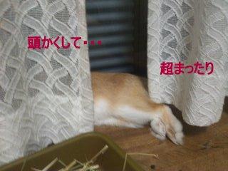 PA0_0023_20120305215541.jpg
