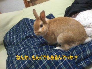 PA0_0023_20120317173634.jpg