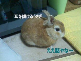 PA0_0049_20120215203240.jpg