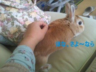 PA0_0076_20120422233719.jpg