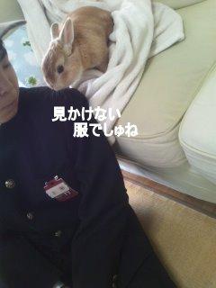 PA0_0091_20120414103333.jpg