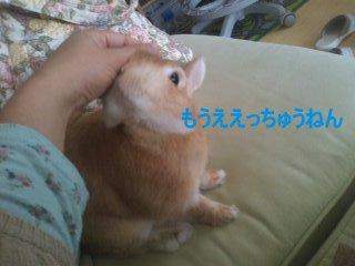 PA0_0091_20120422233703.jpg