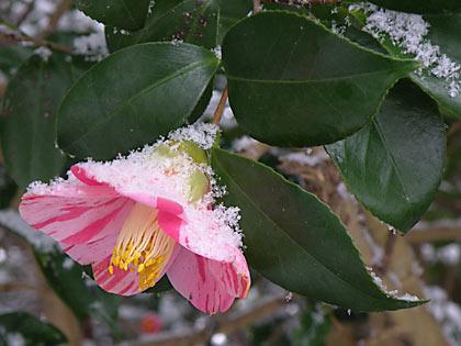 2010雪景色1