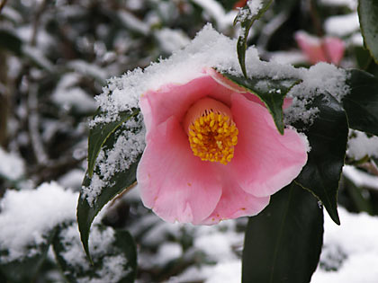 2010雪景色3