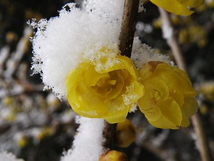 2010雪景色4