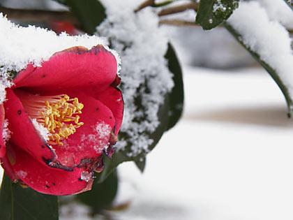 2010雪景色5
