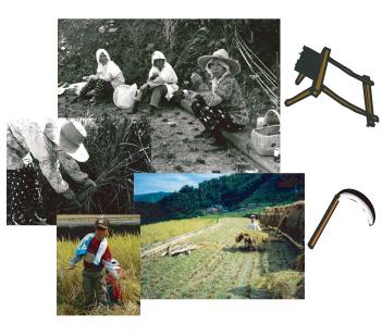 2008年「昔の稲刈り体験」080905c