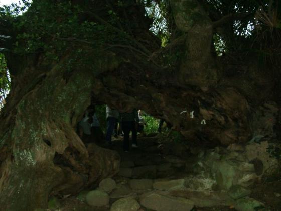 15 生樹の門