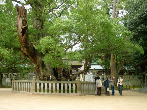 08 大山祇神社