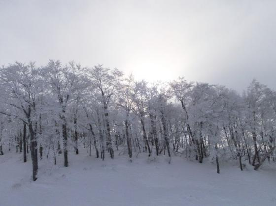02上の方は霧氷