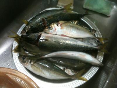 釣った魚1