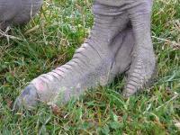 恐竜の足!?