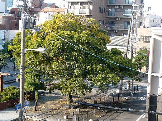 裏のエノキ2009秋