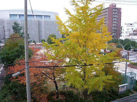 公園の黄葉2009