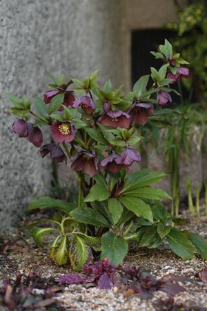 purpleshade2010319.jpg