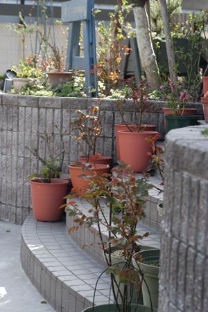 roses2010316.jpg
