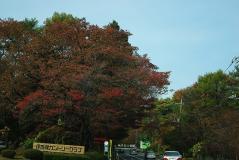 2011榛名紅葉01