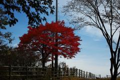 2011榛名紅葉21