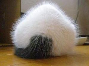 おにぎり猫