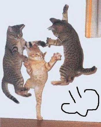 cat01718.jpg