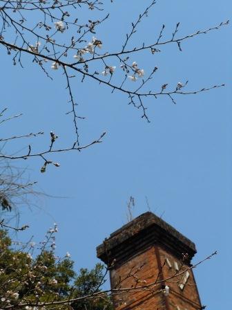 我家の桜3(2011.03.31)
