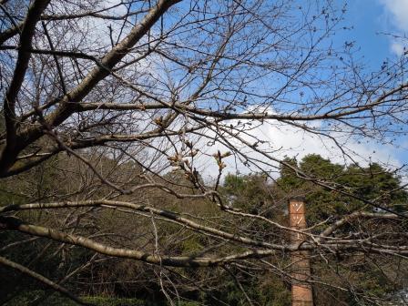 我家の桜(2011.03.27)