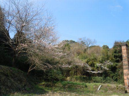 桜2(2011.04.02)