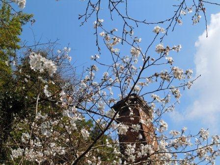 桜4(2011.04.02)