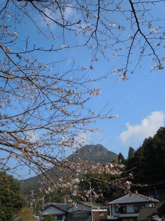 桜5(2011.04.02)