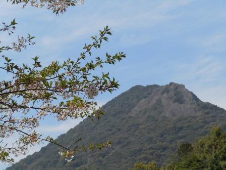 葉桜と英山(2011.04.13)