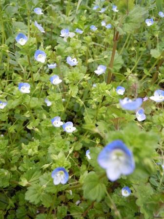 春の花(2011.04.16)