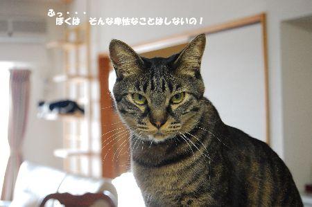 20100313kotetsu.jpg