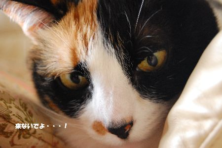 20100313mikan2.jpg
