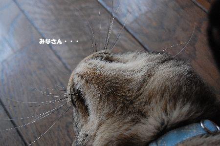20100315kotetsu.jpg