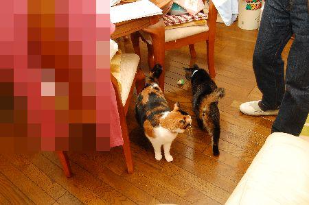 20100325mikankotetsu.jpg