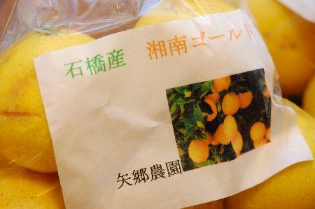 20100327湘南ゴールド