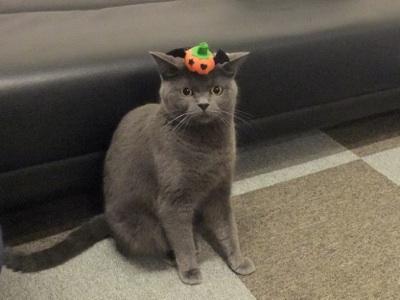 どろしかぼちゃ