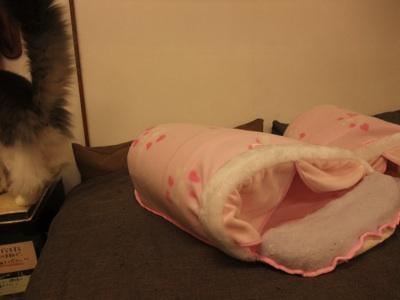 ピンクドーム1