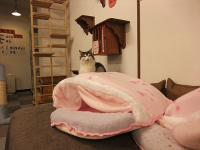 ピンクドーム2