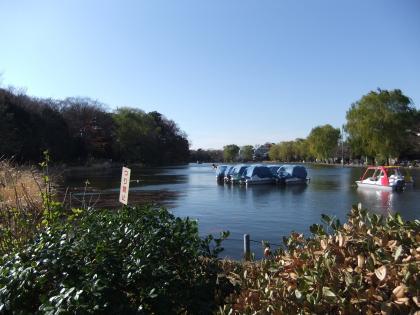 石神井池2