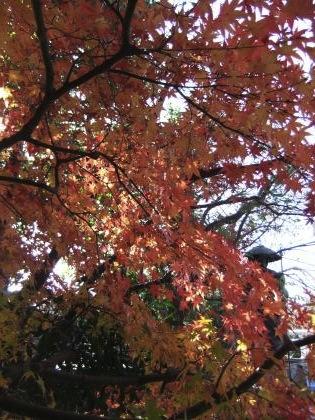 青蓮寺の紅葉