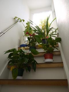 さつぼた花壇
