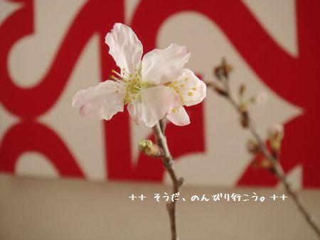 DSC09638-1.jpg