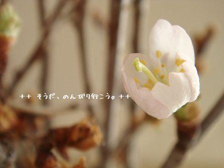 DSC09640-1.jpg