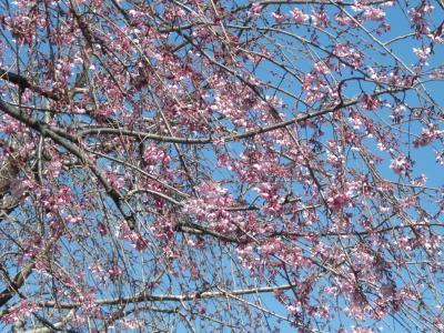 春がきた2