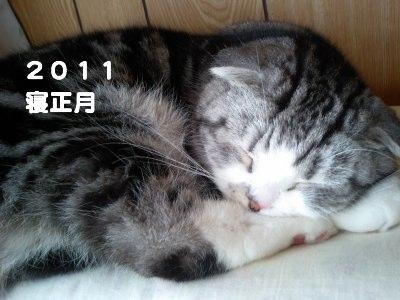 HI360009_20110101183836.jpg