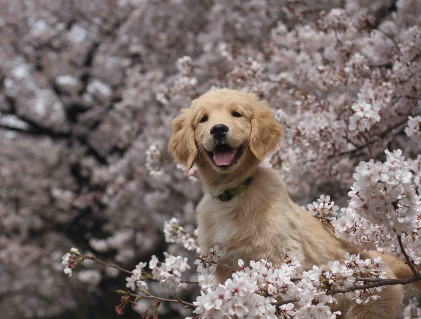 ヒットと桜①