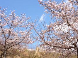 花冷え~2~