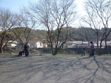 20110330_sakura_001.jpg