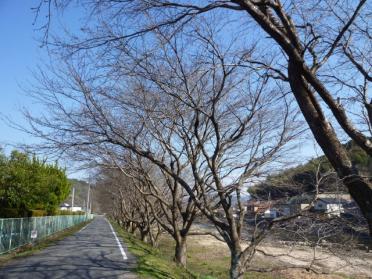 20110330_sakura_003.jpg